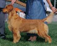 Golden Retriever image:  Bowbanks Addition to Tasmara