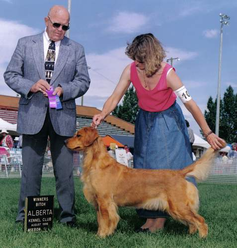Golden Retriever image:  Bowbanks Addition To Tasmara 'Shelbi'