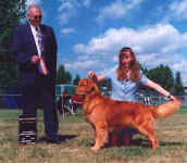 Golden Retriever image:  Ch Tasmara Golden Highjinxs 'Jinxs'