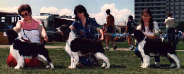 Photo of English Springer Spaniels:  Sarah winning Best Brood Bitch