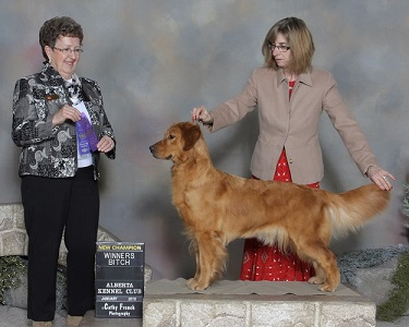 Starr at the Alberta Kennel Club Show